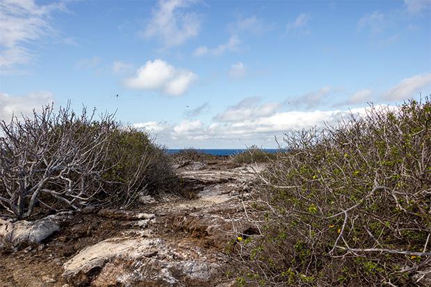 Cruceros a las Islas Galápagos para 1 persona mayo 2018
