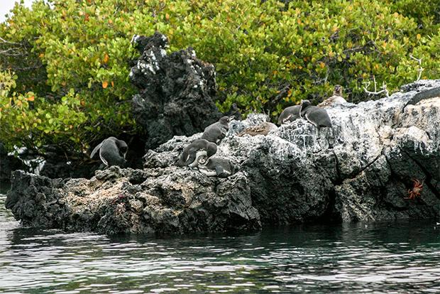 Cruceros a las Islas Galápagos para 10 personas julio 2018