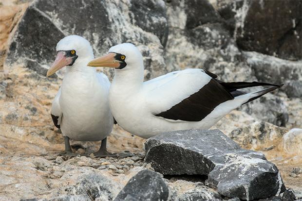 Cruceros a las Islas Galápagos para 2 personas octubre 2018