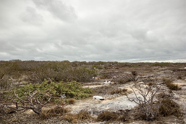Cruceros a las Islas Galápagos para 7 personas julio 2018