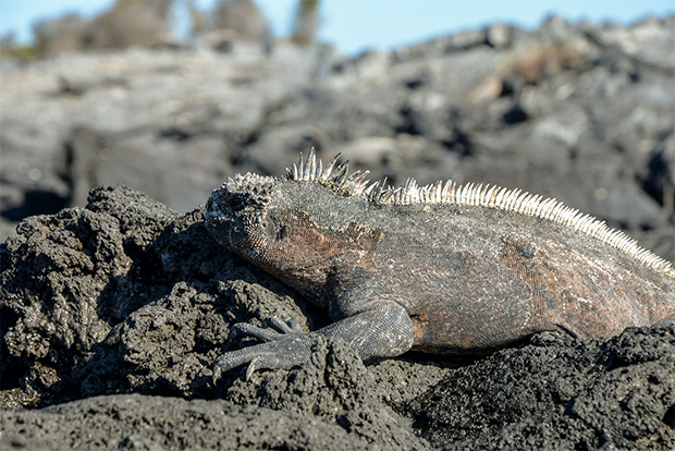 Cruises to the Galapagos Islands for 13 people May 2020