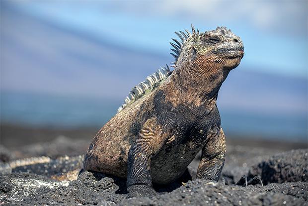 Destinos y Lugares Islas Galápagos 2017