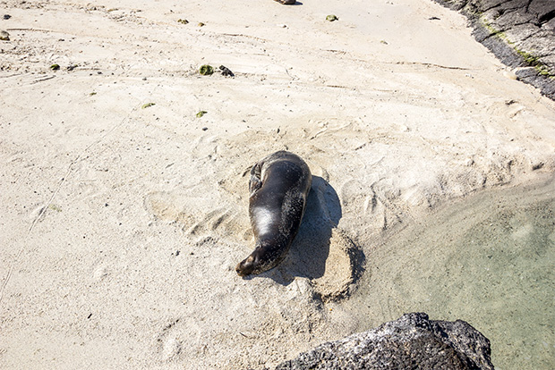 Family cruises to the Galapagos Islands June 2017