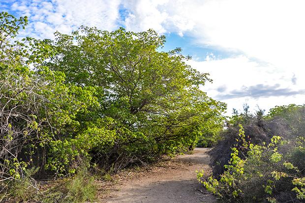 Fiestas en Islas Galápagos mayo 2018