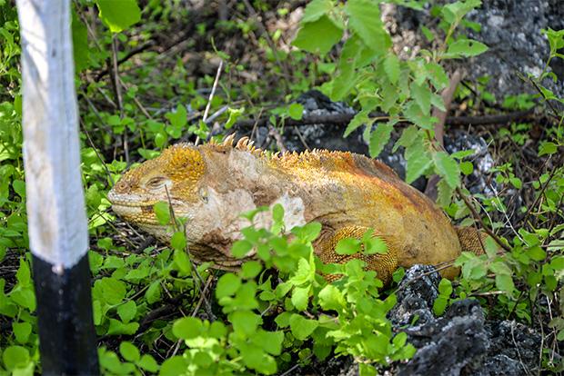 Holidays in Galapagos Islands May 2020