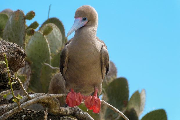 Paquetes Turísticos exclusivos a las Islas Galápagos Semana Santa 2018
