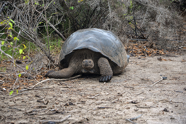 Paquetes Turísticos recomendados a las Islas Galápagos Pascua 2018