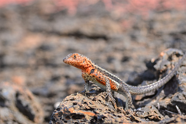 Tourism to Galapagos Islands May 2017