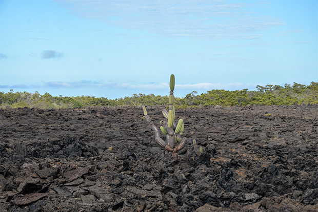 Tours a Galápagos económicos 2017