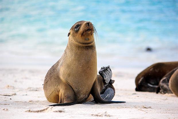 Turismo a las Islas Galápagos febrero 2018