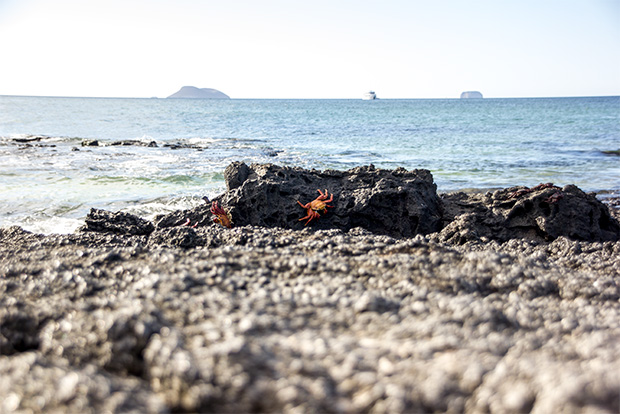 Valores y Costos Cruceros a las Islas Galápagos 2017