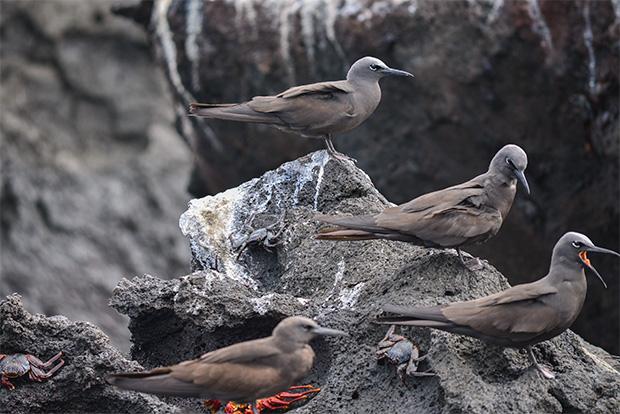 Viajes último minuto a las Islas Galápagos Pascua 2018