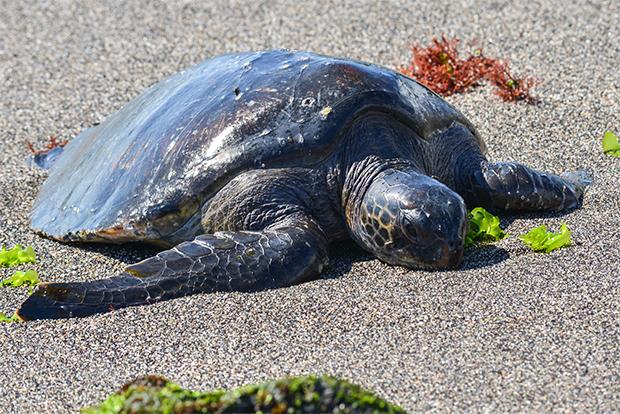 Viajes Express a las Islas Galápagos diciembre 2017