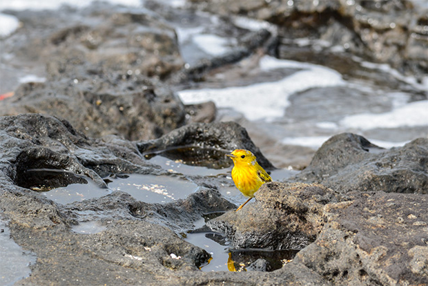 Viajes Islas Galápagos Precios 2019