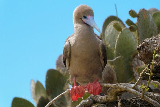 Viajes en promoción a las Islas Galápagos Pascua 2018