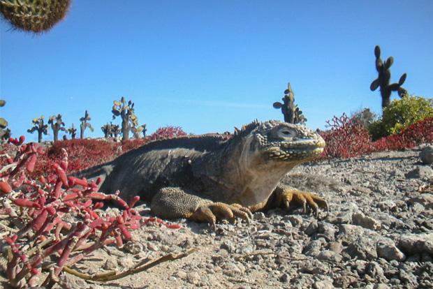 Viajes y aventuras Islas Galápagos 2019