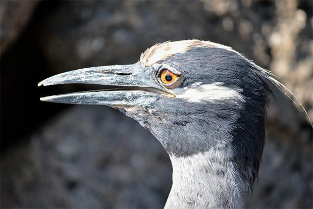Cruceros a las Islas Galápagos mayo 2018
