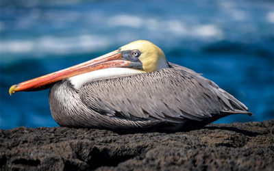Cruceros a las Islas Galápagos para 10 personas octubre 2020