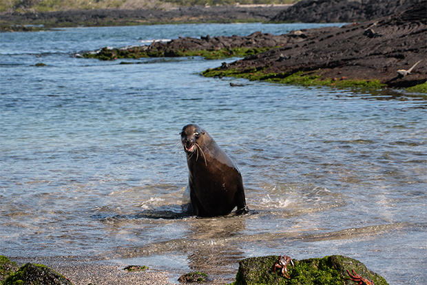 Cruceros a las Islas Galápagos para 3 personas mayo 2018