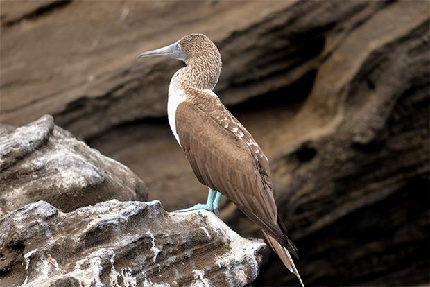 Cruceros todo incluido a las Islas Galápagos Pascua 2020