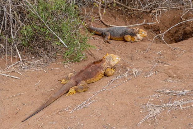 Cruises to the Galapagos Islands July 2020