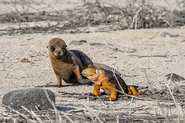Cruises to the Galapagos Islands for 1 passenger September 2017
