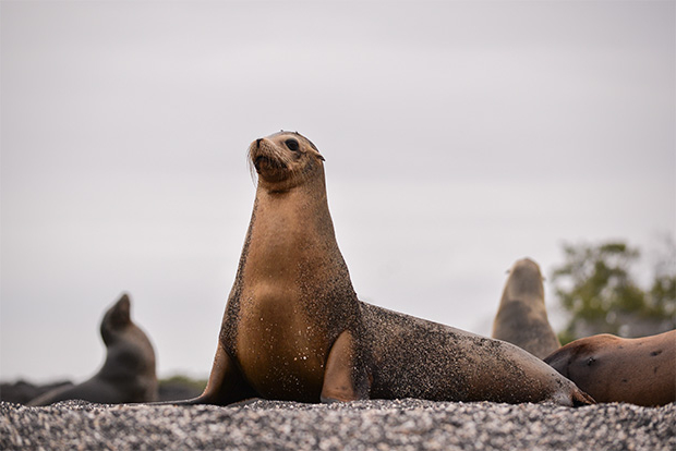 Cruises to the Galapagos Islands for 10 passengers August 2017