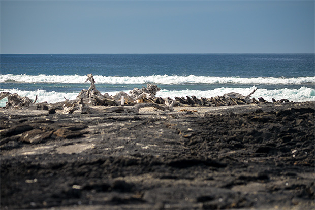 Cruises to the Galapagos Islands for 11 passengers August 2020