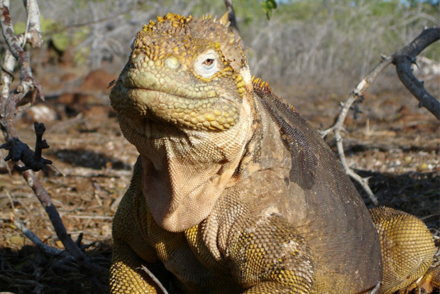 Cruises to the Galapagos Islands for 12 passengers August 2017