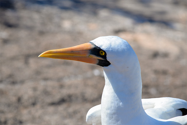Cruises to the Galapagos Islands for 12 passengers July 2017