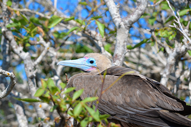 Cruises to the Galapagos Islands for 6 passengers August 2017