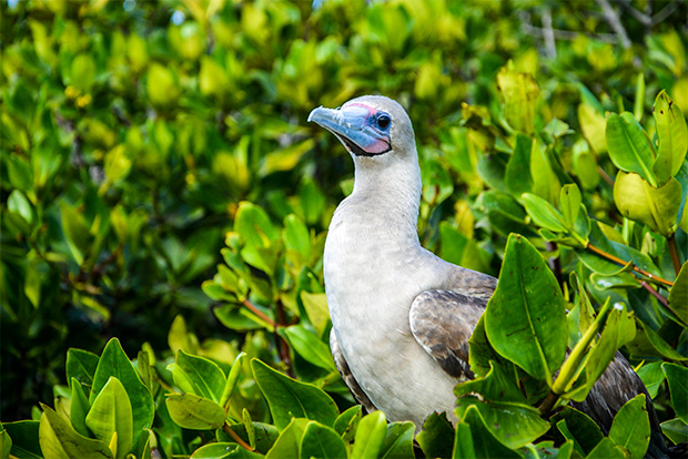 Cruises to the Galapagos Islands for 7 passengers July 2017