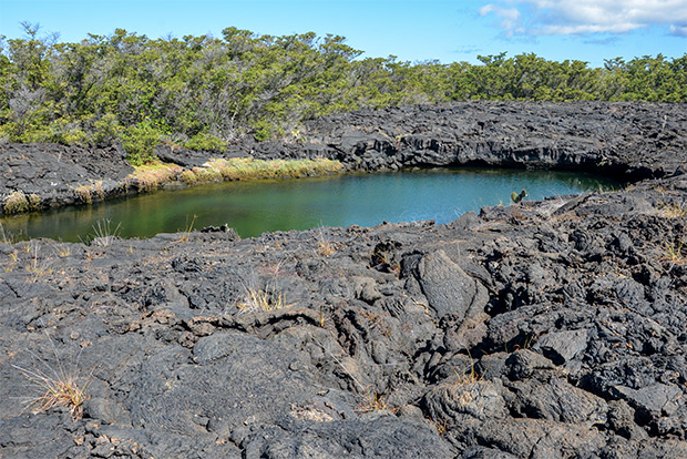Cruises to the Galapagos Islands for 8 passengers August 2017