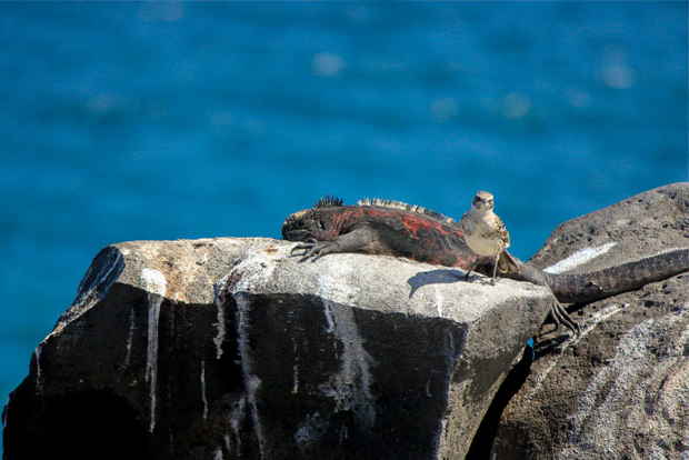 Cruises to the Galapagos Islands for 9 passengers August 2017