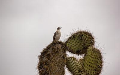 Destinos y Lugares Islas Galápagos 2018