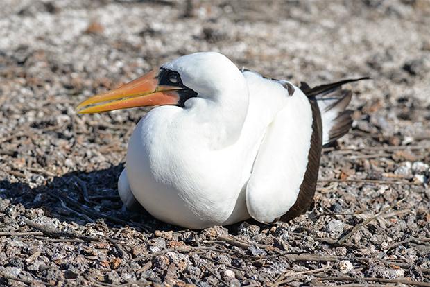 Economy catamarans to the Galapagos Islands October 2020