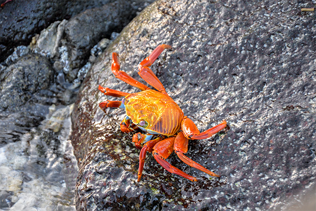 Family cruises to the Galapagos Islands August 2017