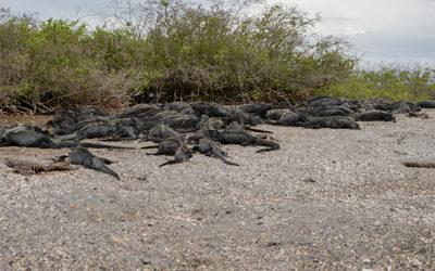 Guía turística todo incluido Islas Galápagos 2020