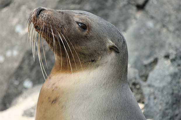Luxury Cruises to the Galapagos Islands August 2017