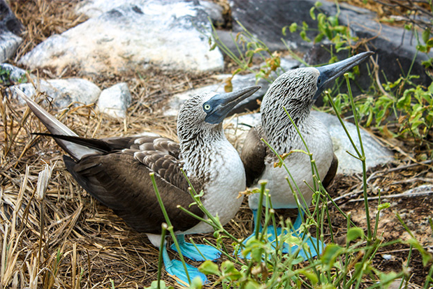 Luxury Cruises to the Galapagos Islands July 2017