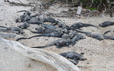 Opiniones y comentarios Cruceros Galápagos 2017