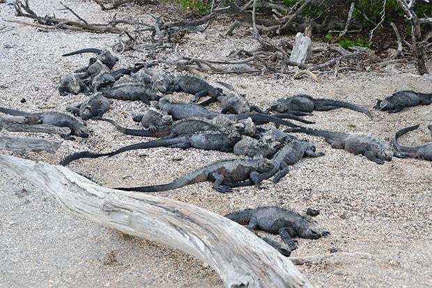 Opiniones y comentarios Cruceros Galápagos 2020