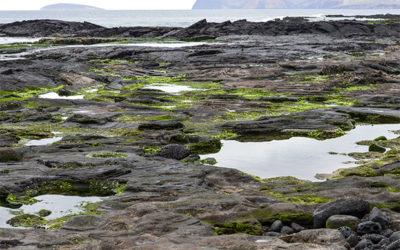 Paquetes Turísticos a las Islas Galápagos junio 2018