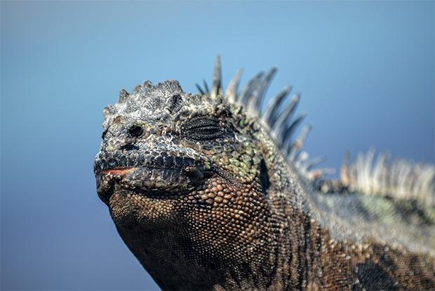 Tourism to Galapagos Islands July 2017