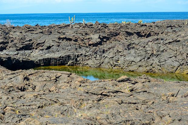 Turismo a las Islas Galápagos en Navidad