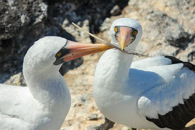 Vacaciones a las Islas Galápagos febrero 2018