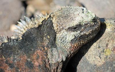 Viajar en Crucero a las Islas Galápagos para el próximo mes