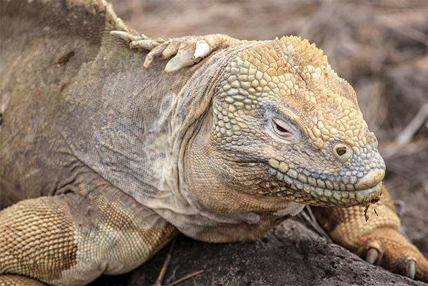 Croisières aux Îles Galápagos en Juin