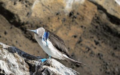 Croisières aux Îles Galápagos en Novembre