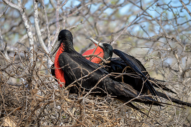 Cruises to the Galapagos Islands for 1 person December 2017